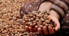 Türkiye'nin önemli ihracat ürünlerinden olan fındıkta tartışmalar bitmiyor.